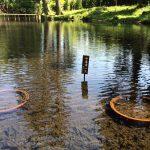 納池公園に植えられた奥州中尊寺の蓮、義経の魂安らかに