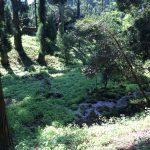 納池公園の上流、久住もやしの名産地