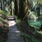 納池公園の巨木の周遊路