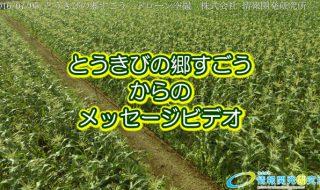 とうきびの郷すごうからのメッセージ 2016 (大分県竹田市の特産スイートコーン)