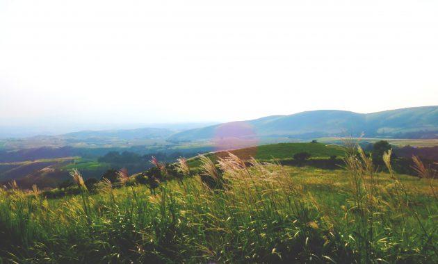 久住高原の秋、ススキの穂が揺れるあざみ台からの風景。牧ノ戸方面。