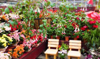くじゅう花公園 温室 アンティル 熱帯植物 ベゴニア