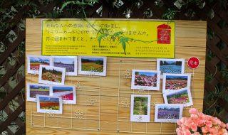 くじゅう花公園 絵葉書 ポストカード