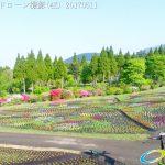 くじゅう花公園 みはらしの丘 春彩の畑 空撮(4K) Vol.1 20170511