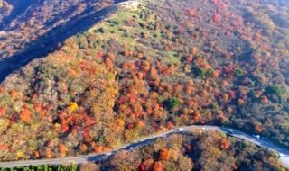 デートや家族旅行で賑わう くじゅうの紅葉に包まれる登山道やドライブルート